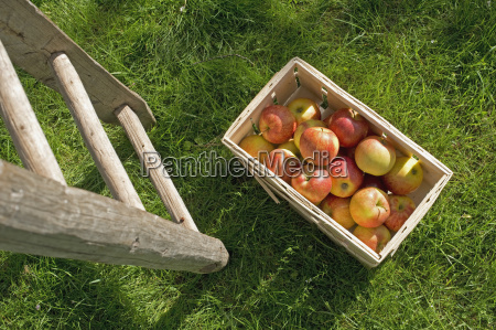 picked apples in box on meadow
