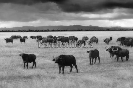 kenya great rift valley lake nakuru