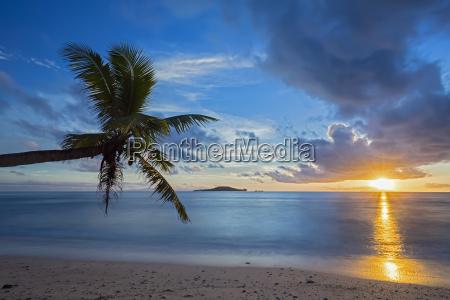 seychelles praslin anse kerlan coconut palm