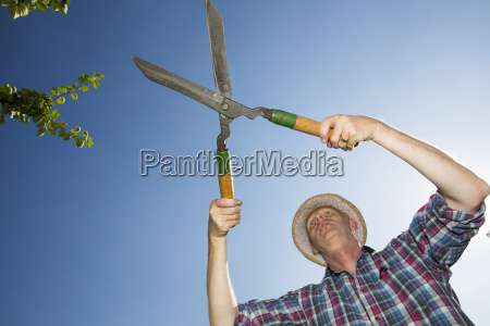 allotment gardener with hedge trimmer in