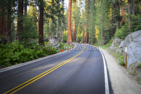 usa california sequoia national park road