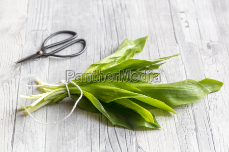 bunch of ramson and scissors on