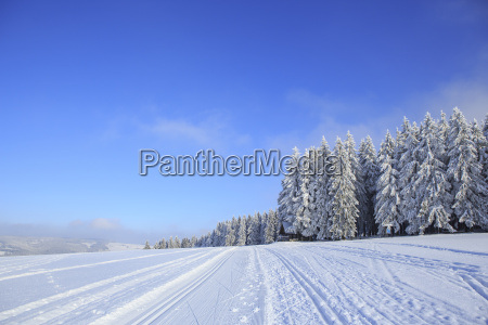 germany thuringia wintry forest with ski