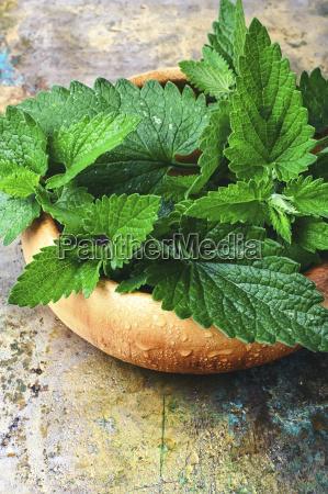 spezia medicina menta cavolo erba aromatizzare
