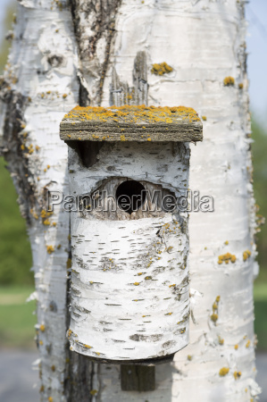 birch tree bird house on birch
