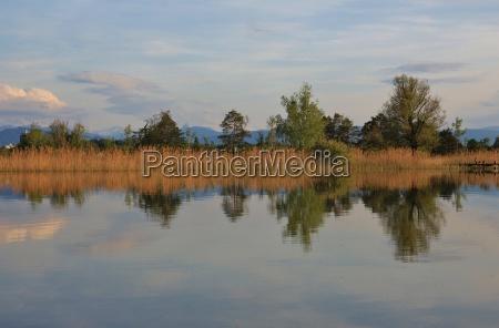 trees mirroring in lake pfaeffikon