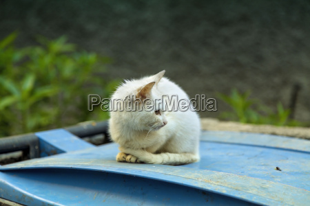 a little cat is sitting on