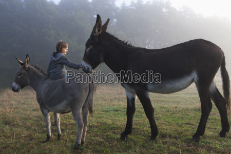 rear view of girl touching mule
