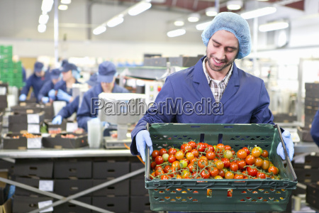 worker holding crate of ripe red