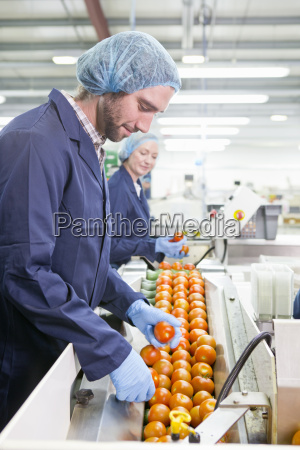 quality control worker examining tomatoes on