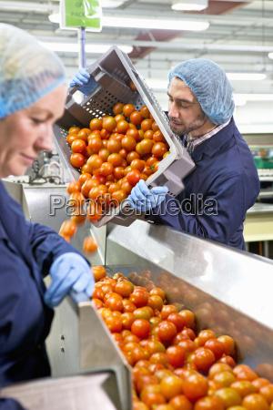 worker emptying bin of ripe red