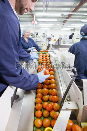 quality control worker inspecting ripe red