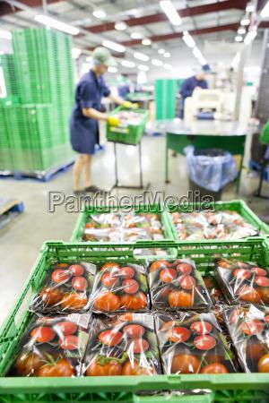 packaged tomatoes in bin in food