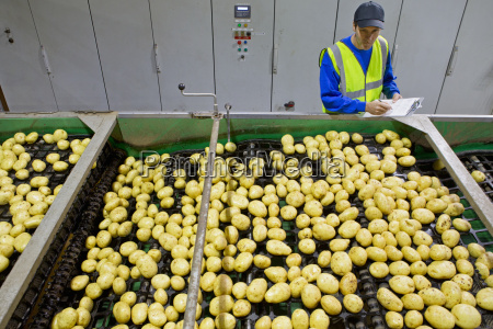 worker with clipboard examining potatoes on