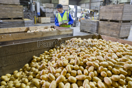 worker with clipboard examining bins of