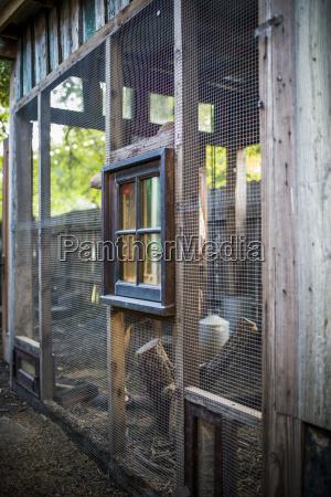 a backyard chicken coop in austin