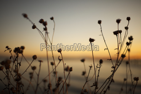 artistic picture of native shrub at