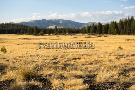 view, of, pristine, landscape, in, tolumne - 17588278