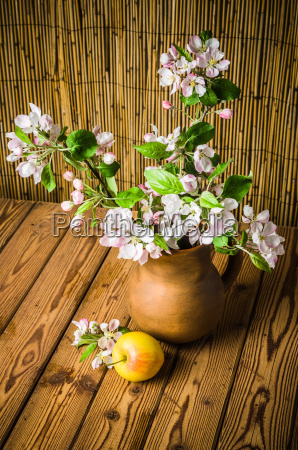 ripe apple and blossoming branch of