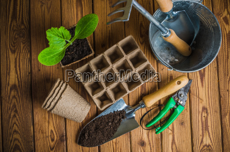 seedlings and garden tools on a