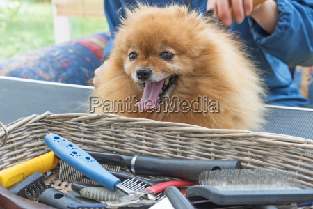 grooming equipment in the basket and