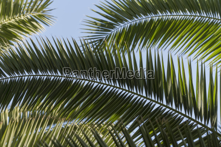 close up of palm fronds majorelle