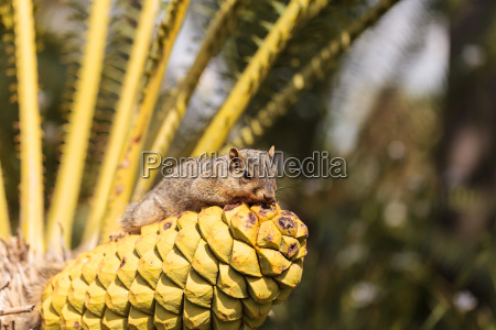 squirrel rests on a palm tree