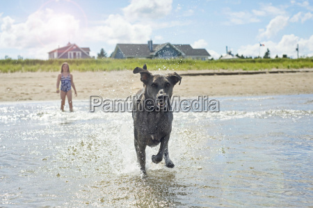 mixed breed whippet australian cattle dog