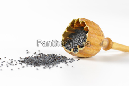 open poppy seed head and seeds