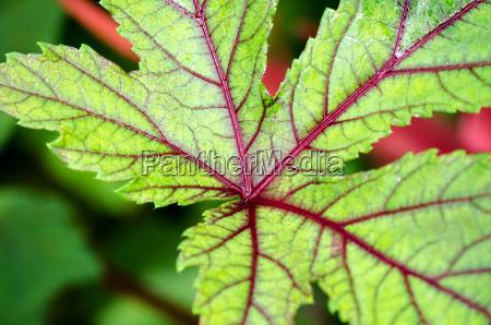 closeup texture on leaf