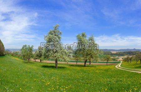 flowering fruit trees in a rural