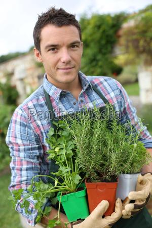 man in vegetable garden planting aromatic
