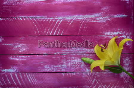 wooden background with a yellow flower
