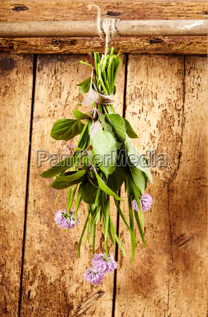 assorted fresh culinary herbs hanging in