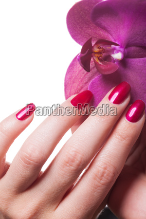well groomed fingernails insulated with orchid