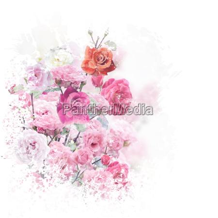 rose flowers watercolor