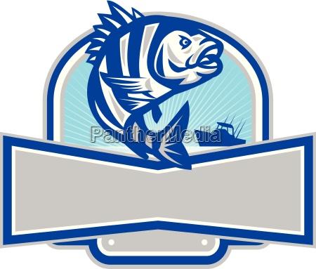 sheepshead fish jumping fishing boat banner