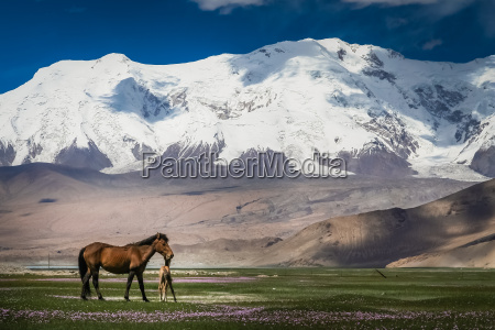 mare and colt on a meadow