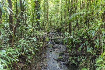 dense jungle with small creek