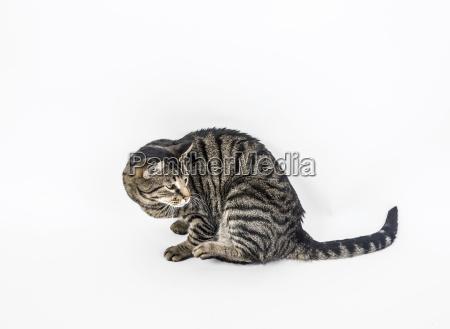 cute cat poses in studio
