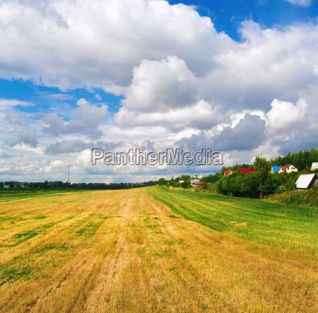 field of cut grass