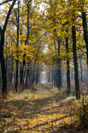 footpath in the wood trees with