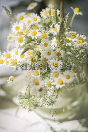 vaso de flor da camomila selvagem