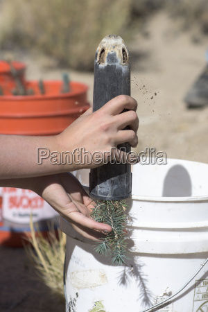 a starter plant is removed from