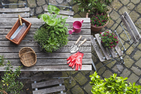 gardening different medicinal and kitchen herbs