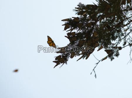 butterflies congregate on a tree branch