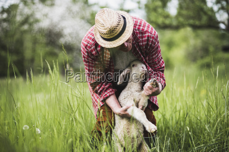 shepherd examining lamb on pasture