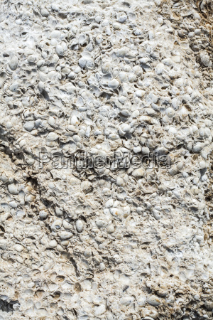weathered shell limestone close up