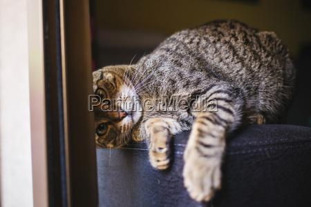 portrait of playful tabby cat