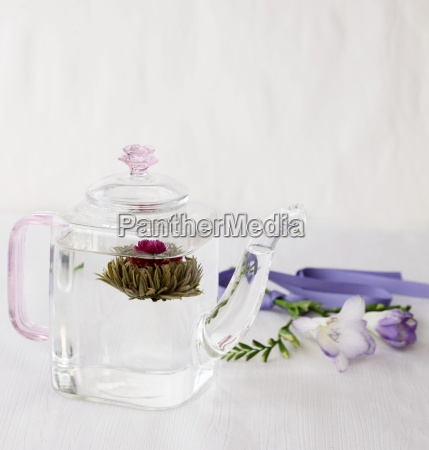 a tea flower in a glass
